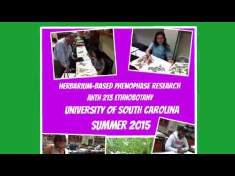 Herbarium-Based Phenology Research RESULTS 2015
